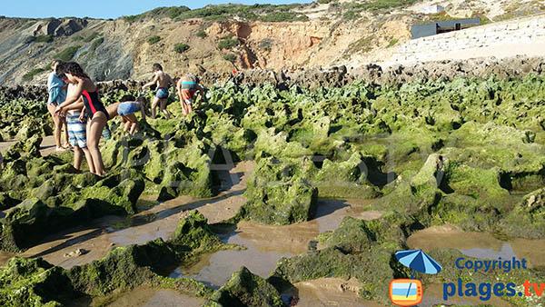 Rochers pour la pêche à pied à Aljezur - plage d'Armoreira do Mar