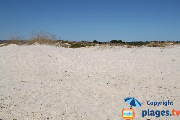 Voyeurs dans les dunes de l'ile de Cabanas