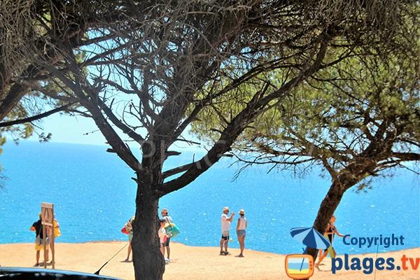 Mer, arbres et falaises à Albufeira