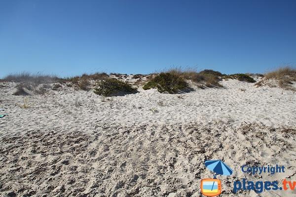 Plage avec des dunes au Portugal - Homem Nù
