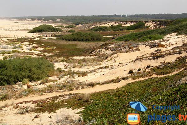 Massif dunaire de Sines au Portugal