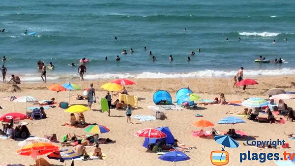 Baignade sur la plage d'Odeceixe - nord de l'Algarve
