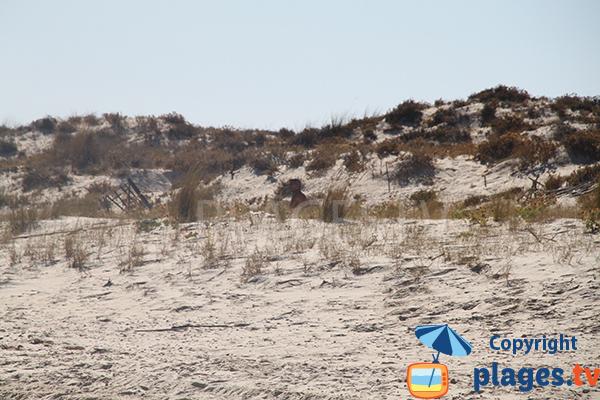 Plage naturiste à ilha de Tavira - Portugal