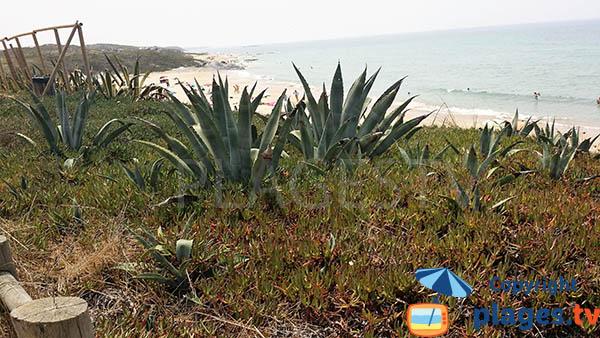 Dune de la plage de Vieirinha à Sines - Portugal